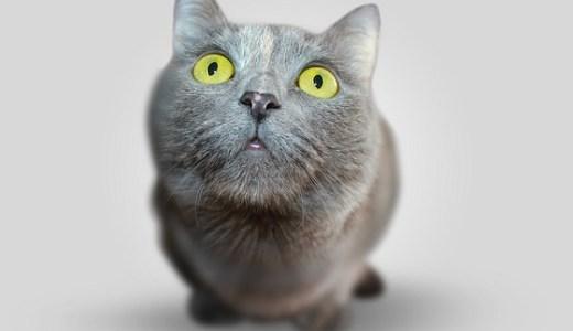 猫の白血病ウイルス感染症(Felv)の症状や治療,予防法は?