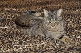cat-697083__180