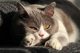猫のてんかん発作(けいれん)の原因や症状と治療や費用は?