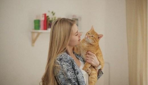猫を抱っこ好きにしたい!抱っこ嫌いな理由とその対処法は?