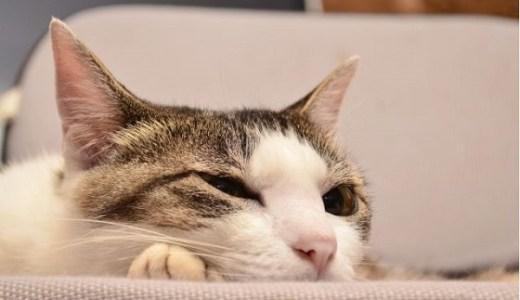 猫が喉をゴロゴロ鳴らす理由とその効果は?骨密度との関係は?