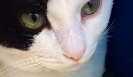 猫の繊維肉腫の症状や治療法!ワクチン接種が原因ってホント?