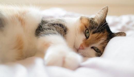猫のトイレの消臭対策!強力な脱臭機能の空気清浄機で快適!