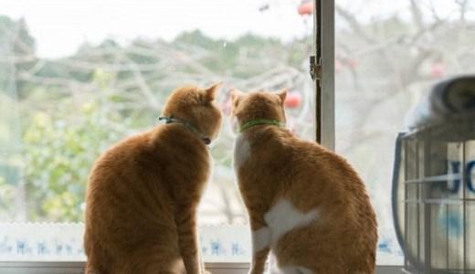 猫カフェin群馬・高崎のご案内!癒しの空間でまったり♪