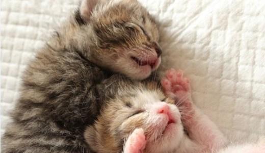 猫専門の動物病院まとめ~東京都内~猫のための医療と安心を!
