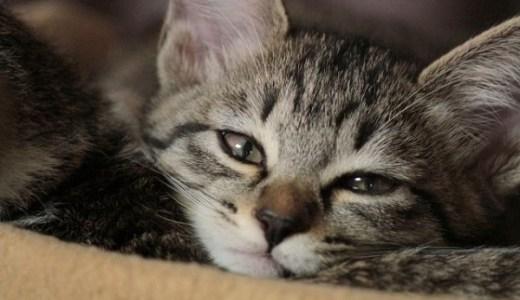 猫専門の動物病院~横浜・神奈川!猫の不安、ストレスを軽減!