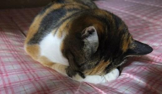 猫専門病院~埼玉・千葉!猫にやさしい動物病院まとめ!