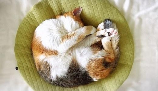 猫専門病院~北海道!猫だけの動物病院でストレス軽減!