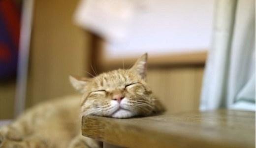 猫カフェ秋田!山王と大平でかわいい猫たちに癒される!