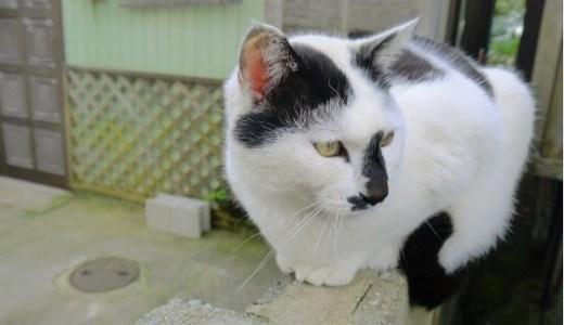 猫の肺炎は命の危険も!原因や症状と治療から予防法まで!