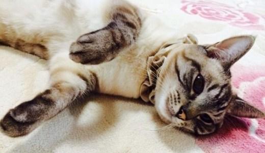 猫が食べるのに痩せる!可能性のある病気とその見分け方!