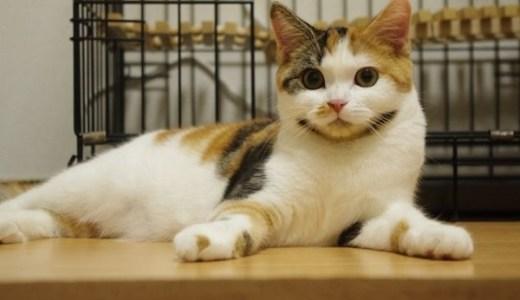 猫カフェ・保護猫カフェin愛知!人気の癒し店まとめ!