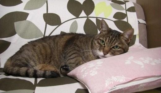 猫は飼いやすい・飼育が楽って本当?実は大きな間違いだった!