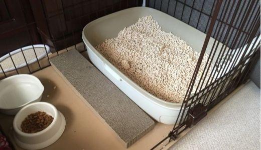猫の全自動トイレが日本上陸!キャットロボットの実力とは?