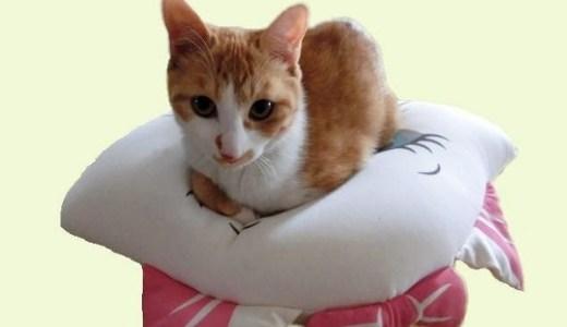 デートで猫カフェに行く時の服装や注意することは?
