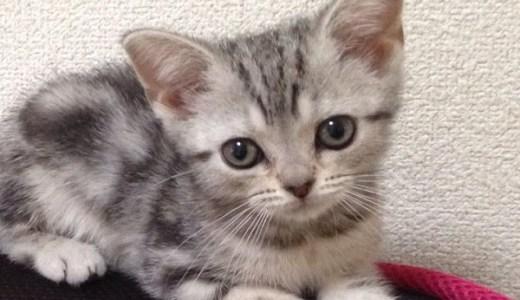 猫は萌えの感情をかきたてる唯一の三次元?/わが家の女王猫