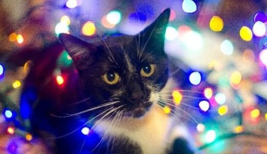 猫の写真撮影にフラッシュは危険!失明やショックの可能性も!