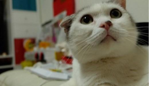 猫の目の瞳孔!左右の違い・非対称の原因や考えられる病気!