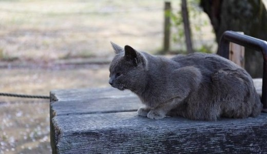 滝川クリステルさん設立の動物愛護団体も猫ブームに警鐘!