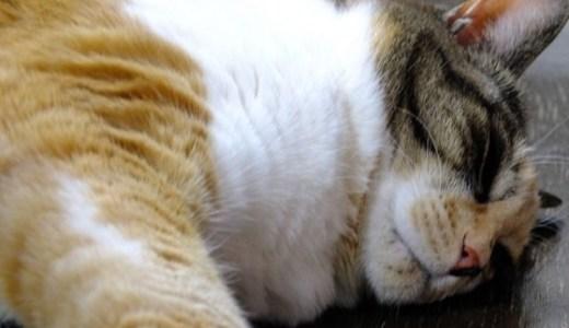 猫の夏バテ!症状によっては点滴などの治療が必要なことも!