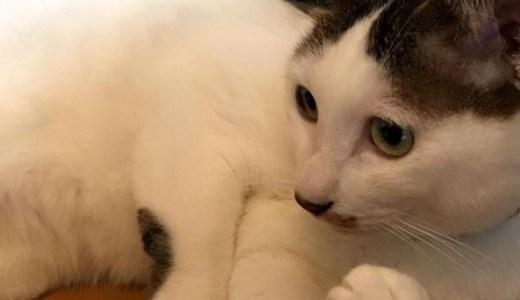 猫の腎不全の症状!末期に見られる痙攣(けいれん)の原因は?