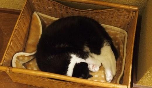 ペットの救急に!夜間診療を行う茨城県内の動物病院まとめ!