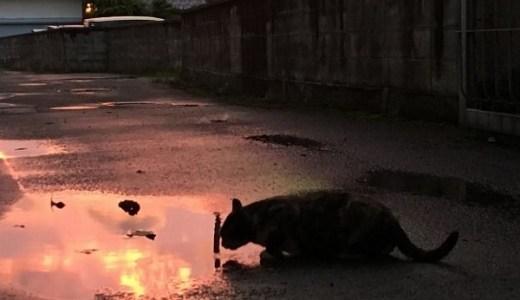 夜間も安心のペット救急対応!石川県内の動物病院一覧!