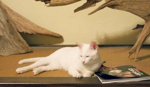猫の慢性腎不全の中期!症状や体の状態、治療や経過について!