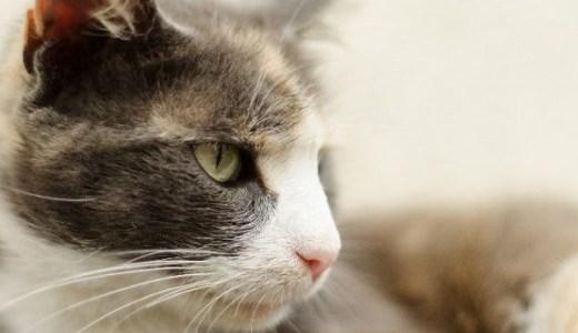 ペットと一緒に入居できる老人ホームが絶対必要な理由とは?
