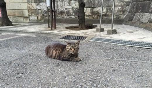 愛媛県で夜間、救急の対応が可能な動物病院!診療時間など!