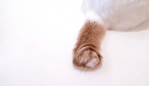 長崎で大人気の尾曲まがり猫モチーフのグッズやスイーツとは?