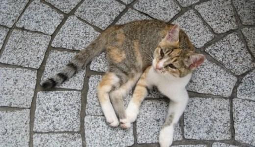 佐賀県の夜間診療、救急対応の動物病院!診療時間や費用は?