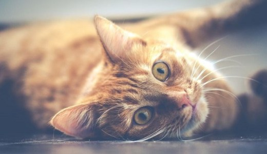 まさかの場所でヘソ天?車でドライブを楽しむ猫の姿に唖然!
