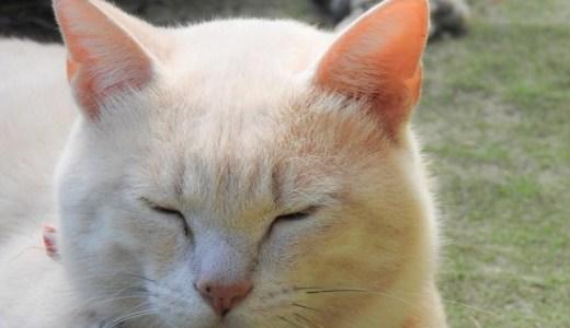 猫の結膜炎は他の猫や人間にうつることはある?予防法は?