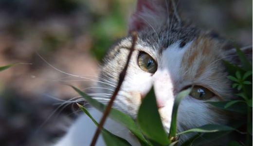 秋田の横手市に誕生した忠猫の館とは?日本一の猫好きの聖地!?