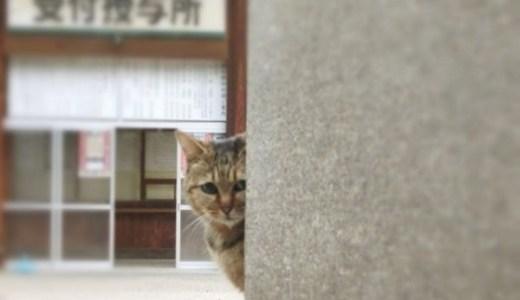 神聖なるネコさま!岡山の伊勢神社で宮司を務める猫とは?