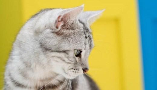 猫の去勢手術の方法!傷口を縫うのと縫わない場合の違いは?
