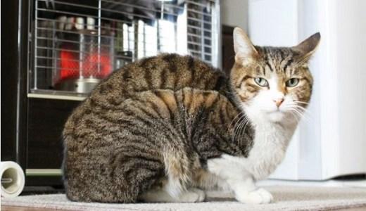 猫が冬に水を飲まないことで増える病気や注意することとは?