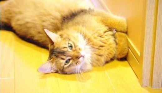 猫の甲状腺機能亢進症の療法食!ヨウ素制限の効果と価格など!