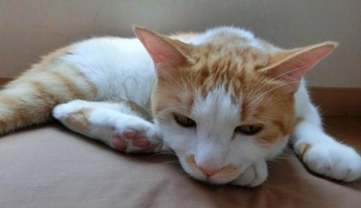 猫や犬の癌に最前線の放射線治療!効果や副作用,費用など!