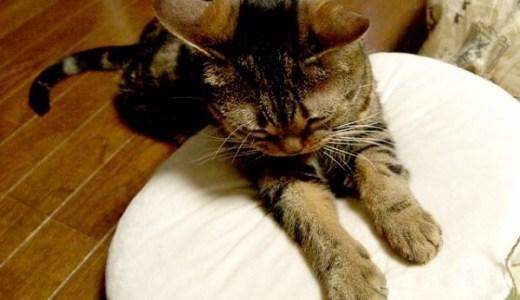 別府の新玉旅館!看板猫ミルクの極上マッサージと猫部屋で昇天!