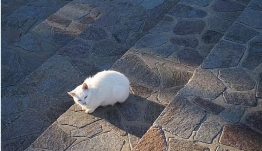 岩合光昭写真展2019開催日程や場所まとめ!世界ネコ歩きなど!
