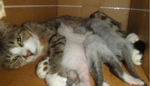 猫の妊娠!レントゲンやエコーなど必要な病院の検査と費用は?