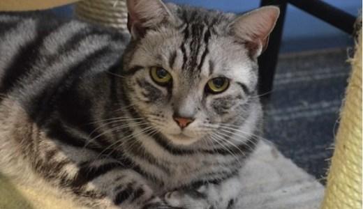 猫のリンパ腫!ステロイドやインターフェロンの治療効果は?