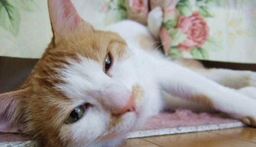 猫の発情を抑えるホルモン注射!効果や副作用,注意点,費用は?