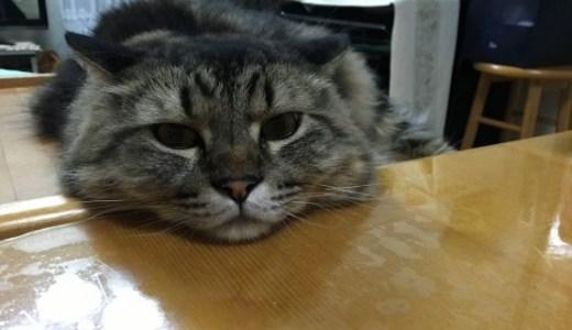 猫の慢性腎不全!高血圧の症状や治療と降圧剤の使用,測定など!