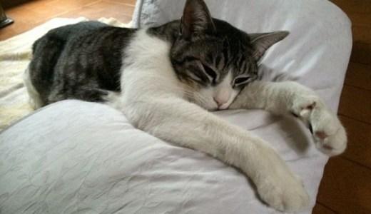 猫の急性腎不全!クレアチニンの数値で見る病状や予後とは?
