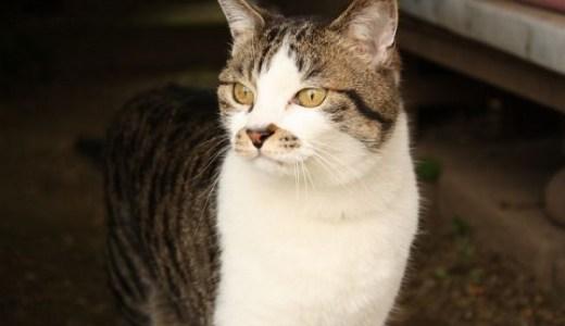 徳島のきたなだ海の駅の猫駅長「なる」はクールな男前にゃっ!