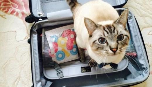 猫の飛行機での移動(国内線)!ストレス回避のための準備など!
