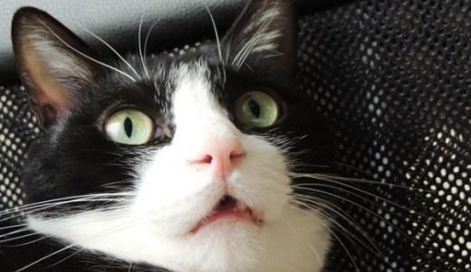 猫の口内炎に馬油の効果は?痛みの軽減や症状の改善は?